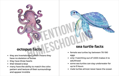 Sea Creature Fact Cards - Great for any ocean unit study!