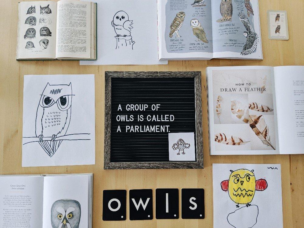 Free Owl Unit Study Resources
