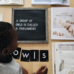 Owl Mini Unit Study Resources