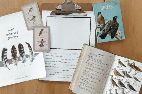 Bird Watching Journal - a printable nature study journal